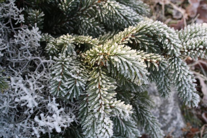 vinter i Lennartsfors-Gittas Verkstad